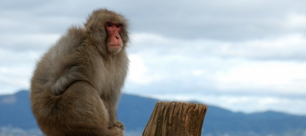 macaque-at-mount-arashiyama